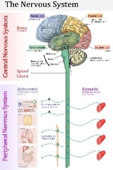 Neurological Care